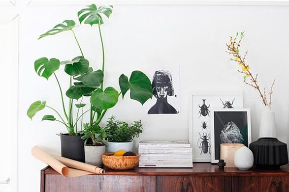 how-to-indoor-plants-130612-2